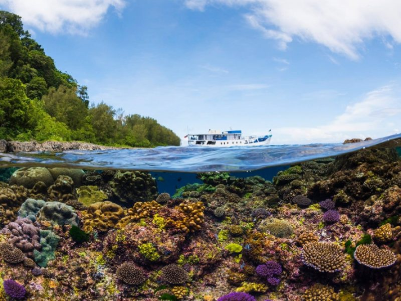 solomon-islands-bilikiki-liveaboard-credit-matt-smith