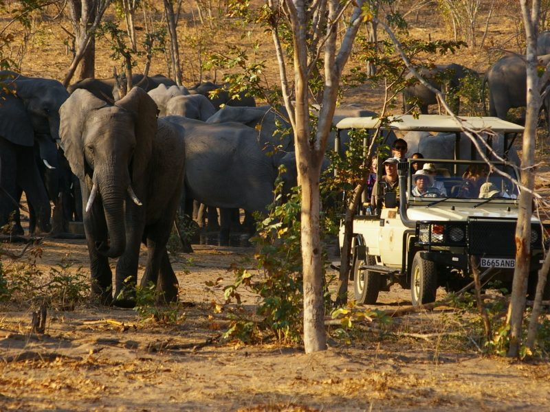 chobe-game-lodge-game-drive