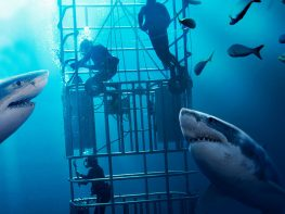 guadalupe-island-great-white-cage-diving
