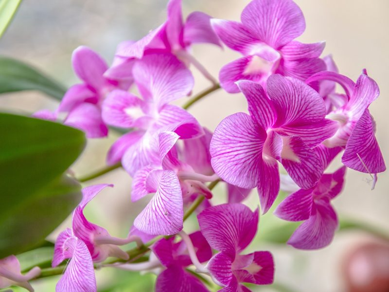 orchid-1594604_1920